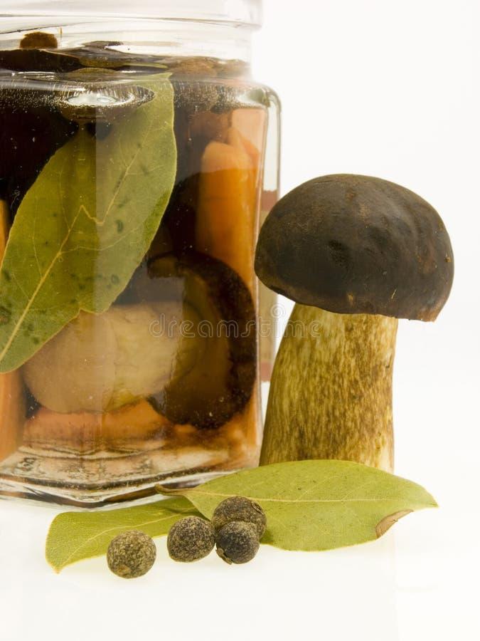 瓶子蘑菇 图库摄影
