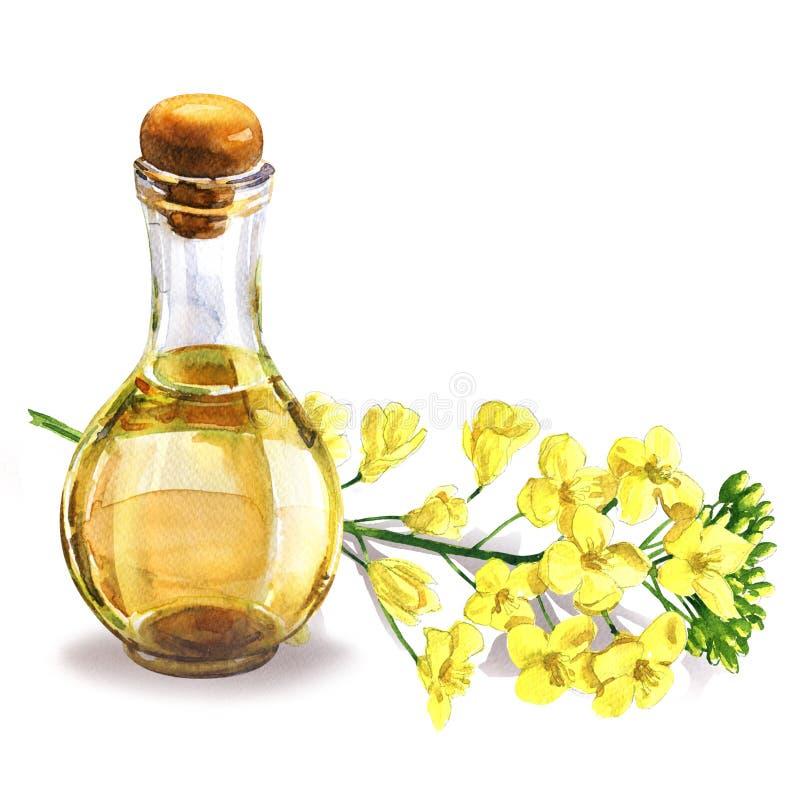 瓶新鲜的有机菜子油和油菜子花,开花的油菜籽油菜或菜子,隔绝,手拉 向量例证