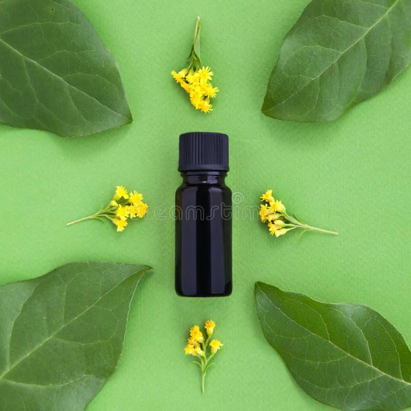 瓶精油用新鲜的草本和黄色花在绿色背景 库存图片