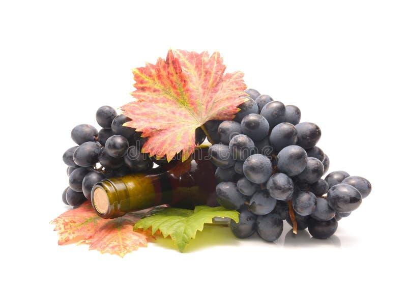 瓶红色和白葡萄酒用新鲜的葡萄 免版税图库摄影