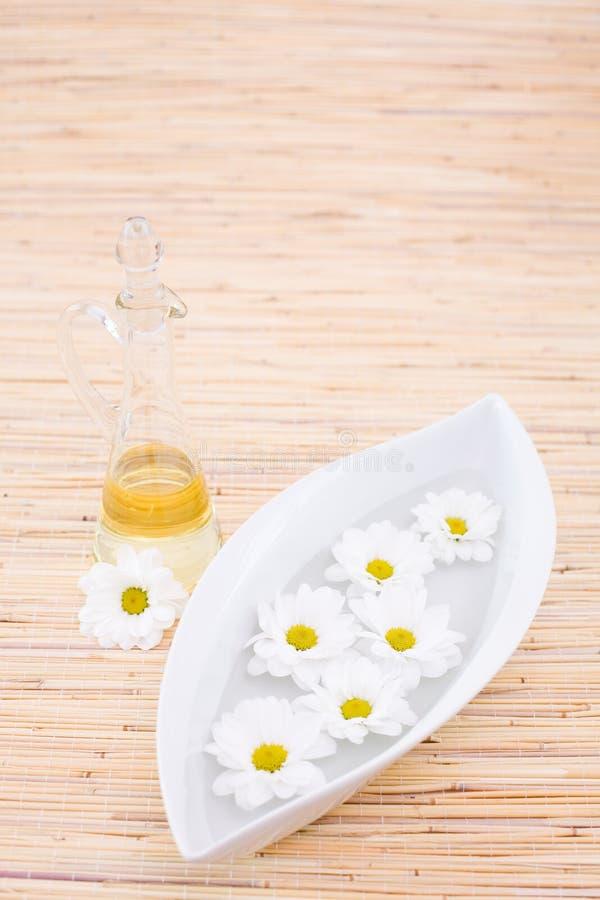 瓶雏菊精油 库存图片