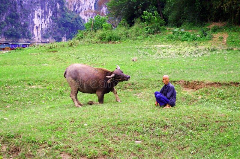 瓷中国母牛农夫 库存图片