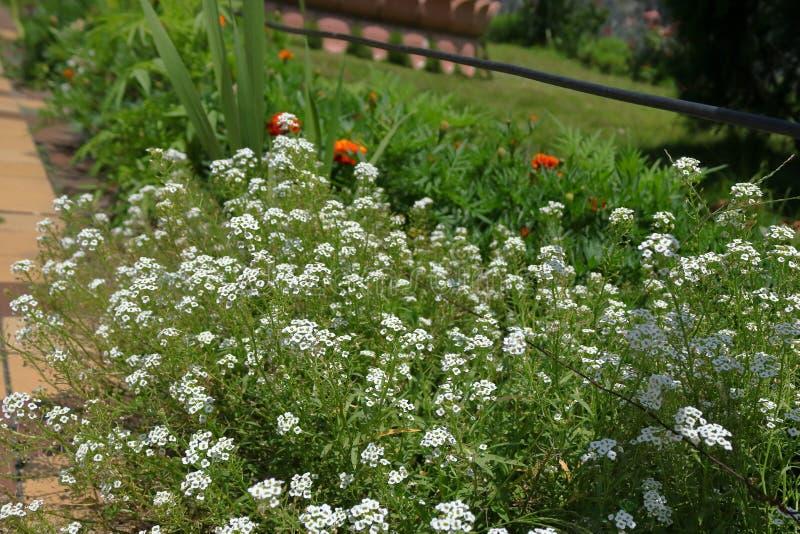 甘托克印度花园 免版税库存图片