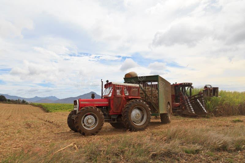 甘蔗收获在毛里求斯 免版税库存图片
