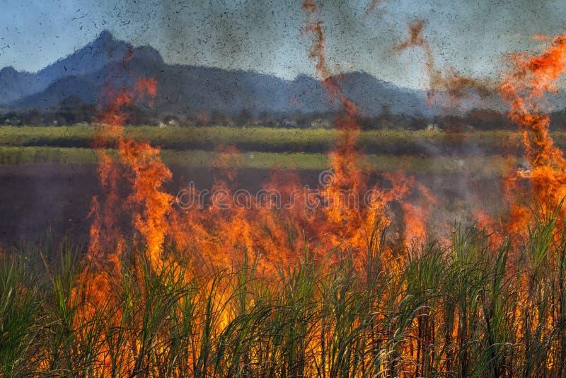 甘蔗燃烧和登上警告在澳大利亚 免版税库存图片