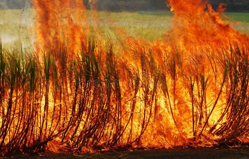 甘蔗燃烧 免版税库存图片