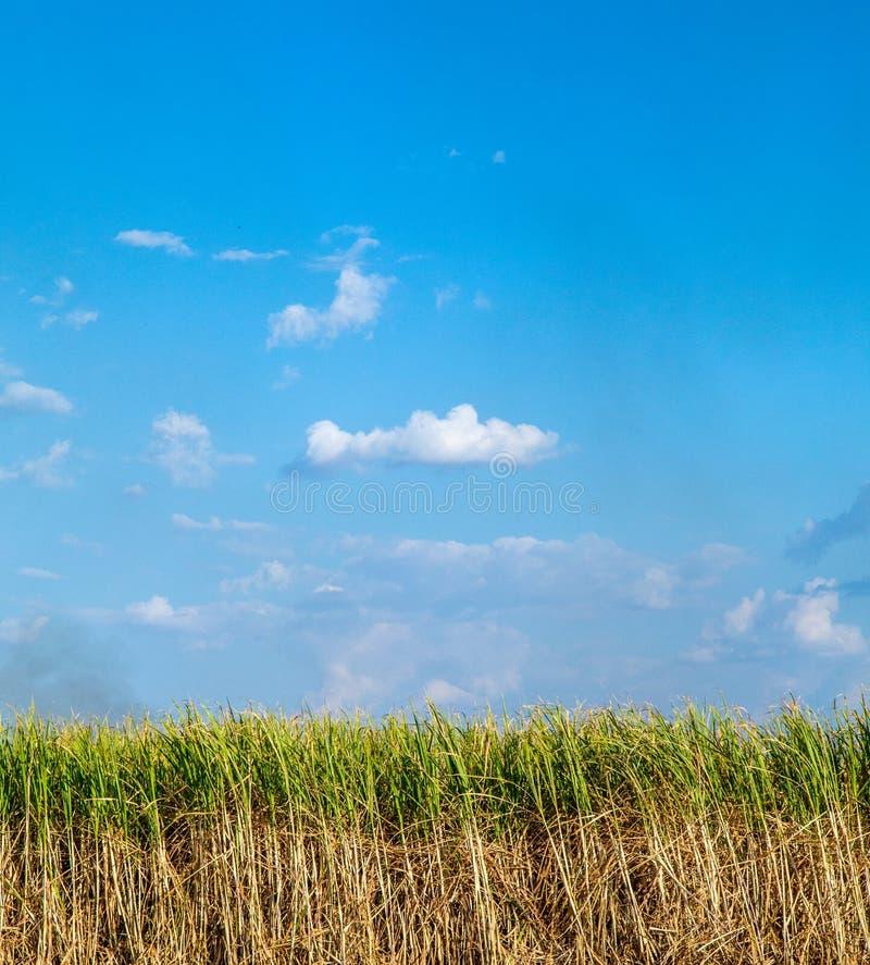 甘蔗种植园和火 免版税库存照片