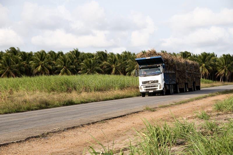 甘蔗运输卡车 免版税库存图片