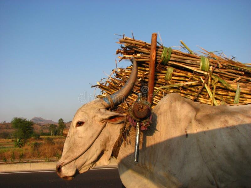 甘蔗运输 免版税库存图片