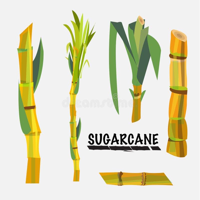 甘蔗- 向量例证