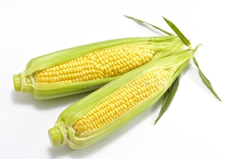 甜新鲜的玉米 库存照片
