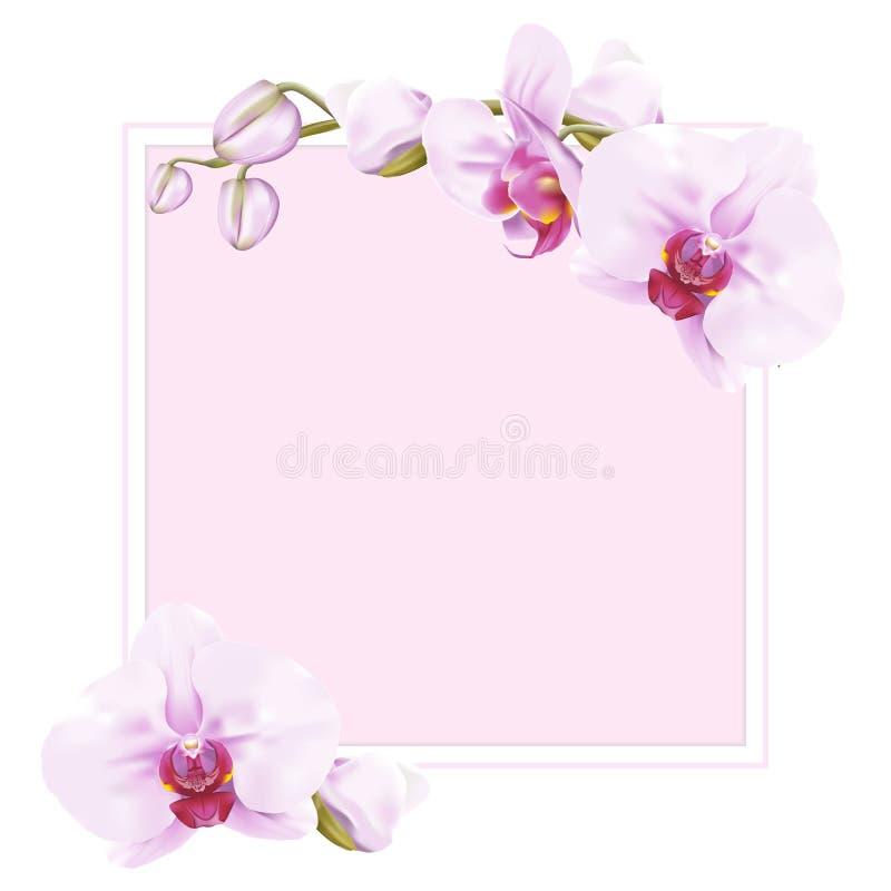 甜桃红色蝴蝶兰框架和边界 向量例证