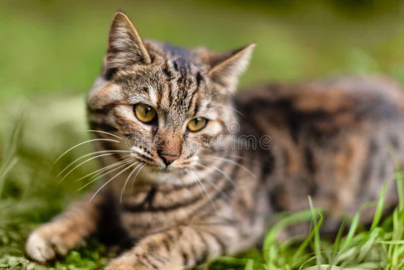 甜猫 免版税图库摄影