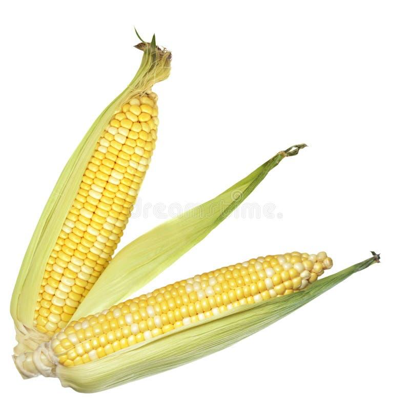 甜玉米 免版税库存图片