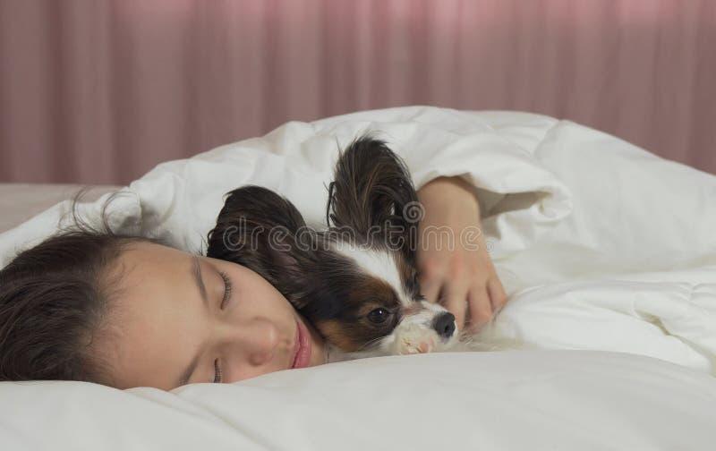 甜甜地睡觉在与Papillon狗的床上的美丽的青少年的女孩 免版税库存图片