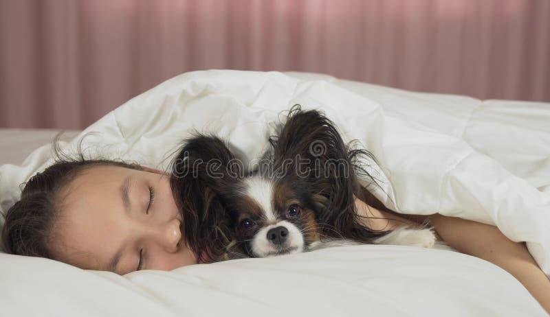甜甜地睡觉在与Papillon狗的床上的美丽的青少年的女孩 图库摄影