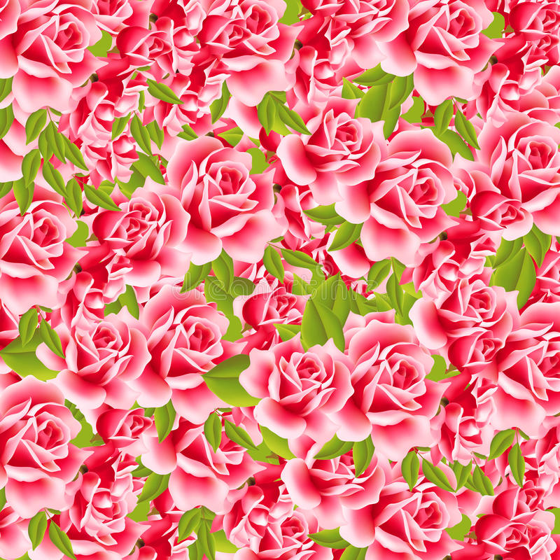 甜的玫瑰 库存照片