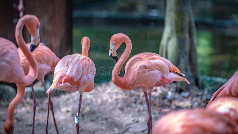 甜粉红彩笔火鸟野生生物动物 免版税图库摄影