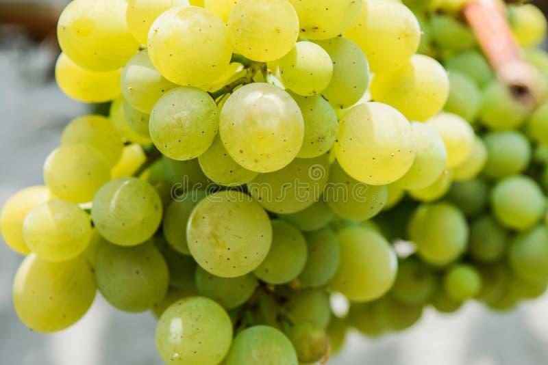 甜绿色葡萄 免版税库存照片