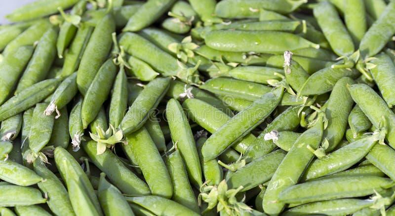 甜绿豆新鲜的荚  图库摄影
