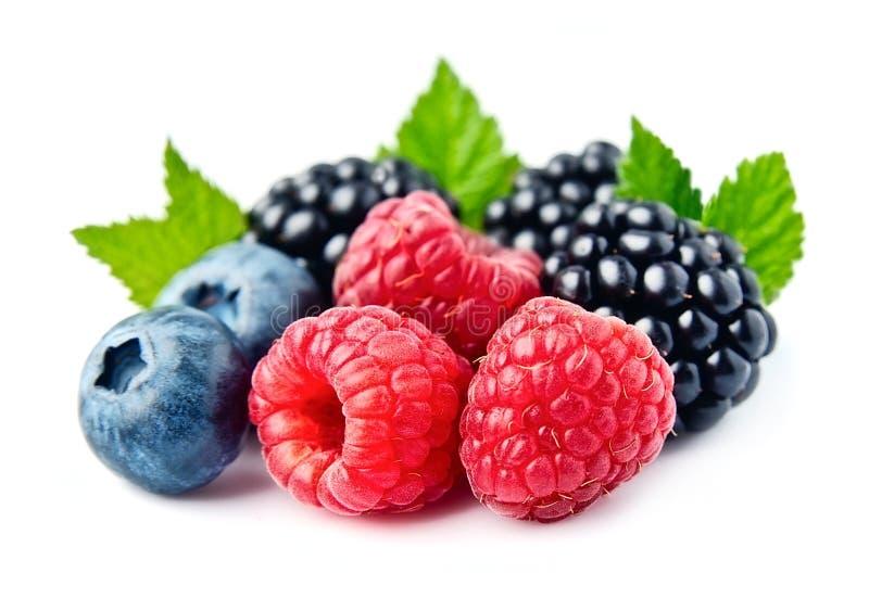 甜莓果混合 库存照片