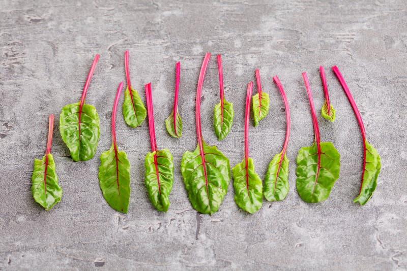 甜菜根叶子 库存图片