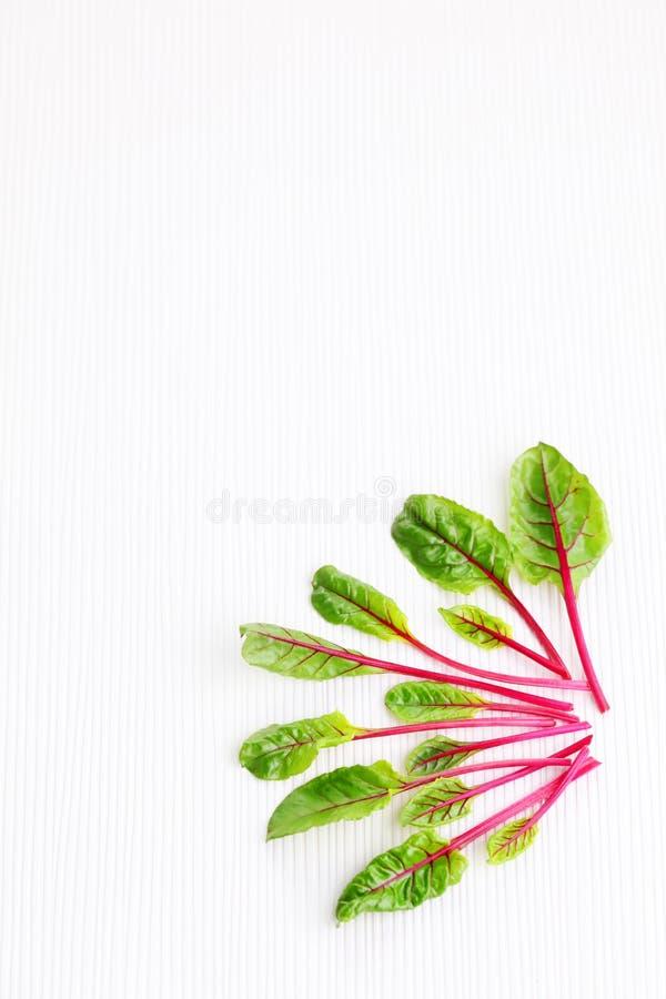 甜菜根叶子 图库摄影