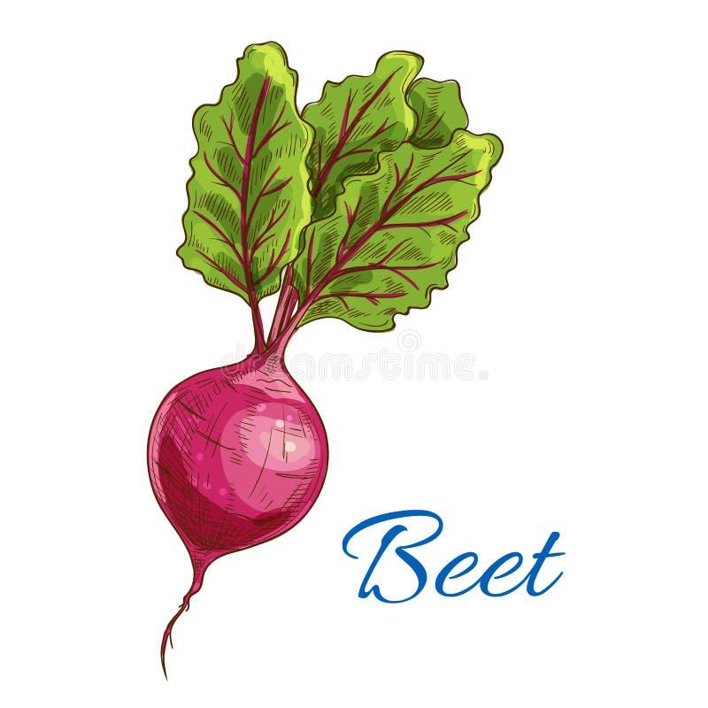 甜菜象 新鲜的与叶子的农厂菜肿胀 库存例证