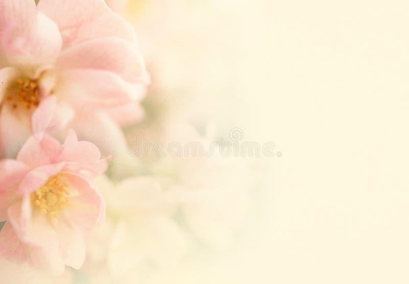 甜颜色玫瑰在软性开花并且弄脏在桑树纸纹理的样式 免版税库存照片