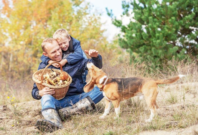 生与使用与在秋天森林沼地的狗的儿子 免版税库存照片