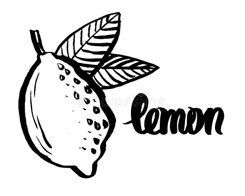 生动描述柠檬和手写的词`柠檬`,剪影,手拉的传染媒介例证风格化图画  向量例证