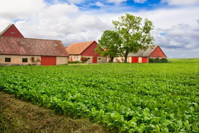 生动的农田 免版税库存图片