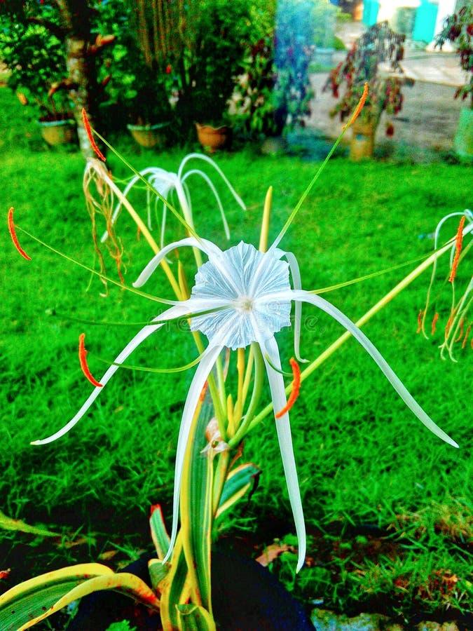 生动的白色热带花HD背景 免版税库存图片