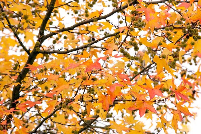 生动秋天的结构树 免版税图库摄影