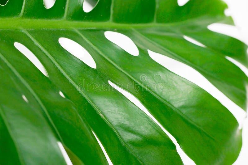 生动绿色的叶子 库存图片