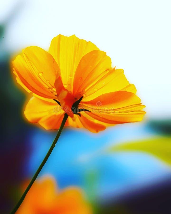 生动,花,自然桔子,植物群,动物区系 图库摄影