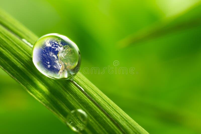 生叶与雨小滴-补救地球概念 免版税库存图片