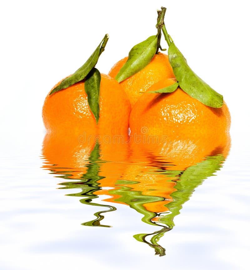生叶反映蜜桔三水 库存图片