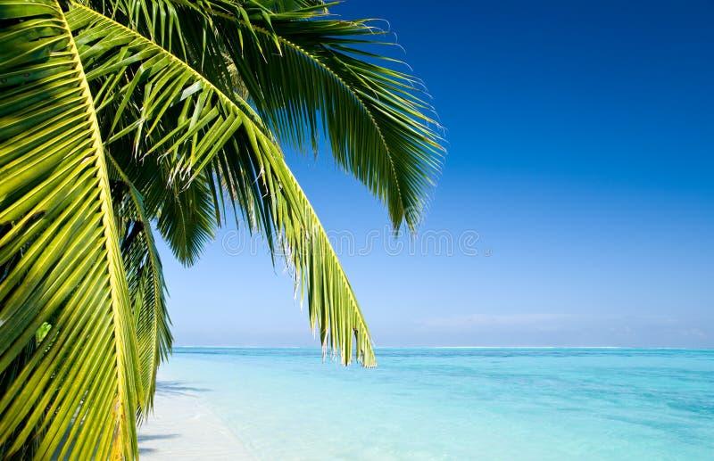 生叶棕榈树 免版税图库摄影
