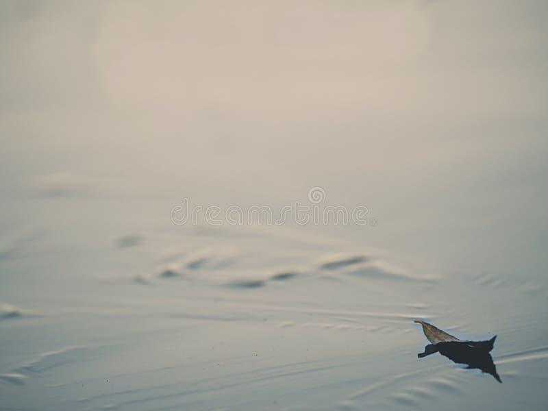 生叶的低脚腕视图在冰 冻结的池塘水平 免版税图库摄影