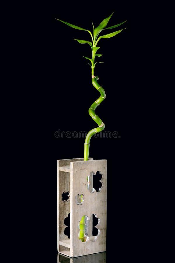 生态与竹词根的概念图象在黑背景的木花瓶 库存图片