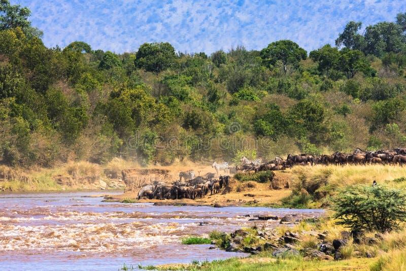 生态旅游 照片徒步旅行队在非洲 mara马塞语 免版税库存照片