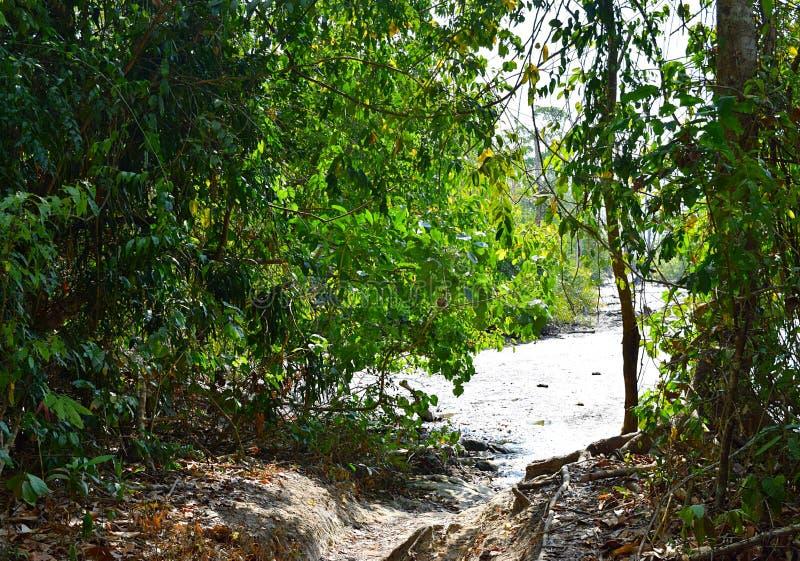 生态旅游-艰苦跋涉通过常青热带雨林-大象海滩, Havelock海岛,安达曼群岛,印度 免版税库存照片