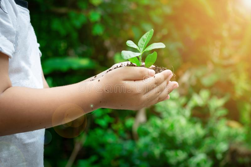 生态概念孩子递拿着植物一根树树苗与在地面世界环境日 免版税库存图片