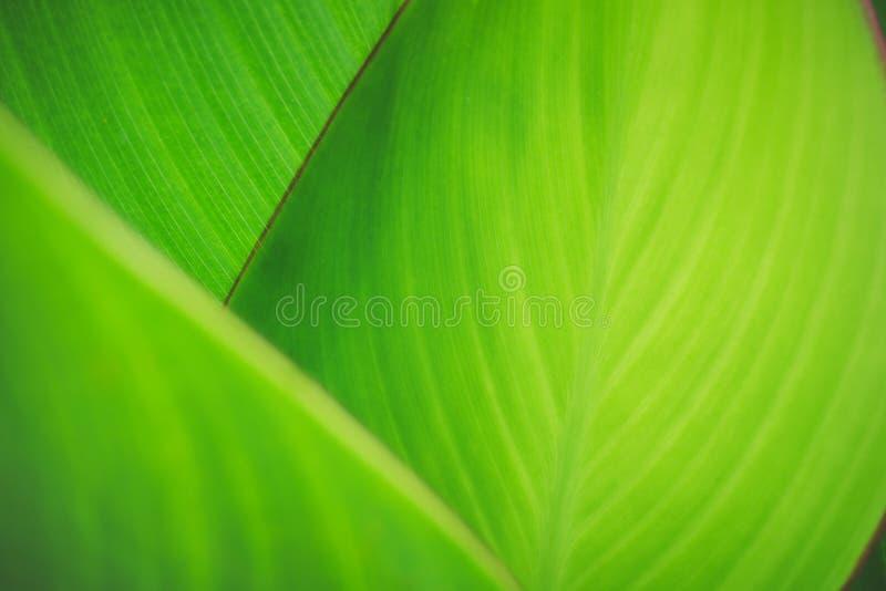 生态概念的绿色叶子纹理选择聚焦自然迷离背景 库存图片
