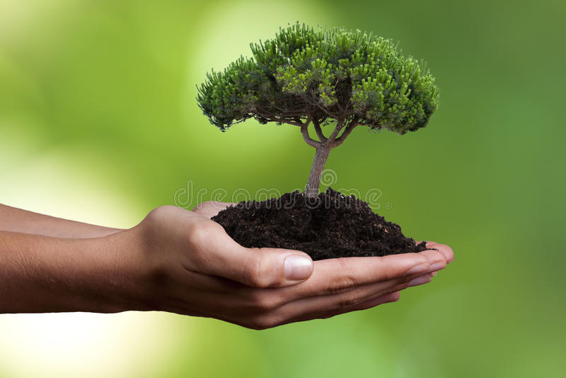 生态概念 免版税库存照片