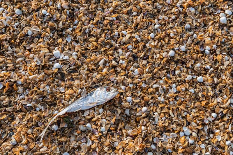 生态问题,鱼死亡在海 免版税库存图片