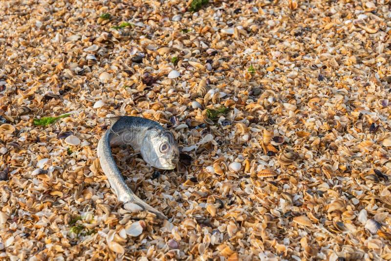 生态问题,鱼死亡在海 库存照片