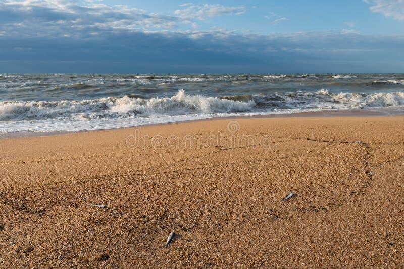 生态问题,鱼死亡在海 图库摄影