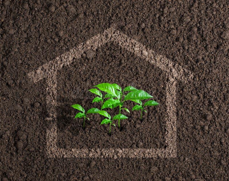 生态活房子生长概念 免版税库存照片
